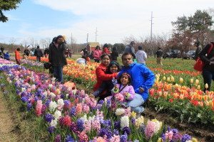 Holland, MI road trip for Tulip Festival | Ghoomna Phirna